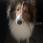 お寺の愛犬Louis(ルイ)ちゃん