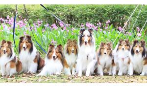 お寺の愛犬たち