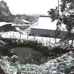 境内の様子(雪)
