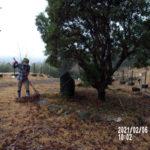 ヤマモモの木の様子(清掃)