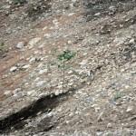 センダンの木を移植