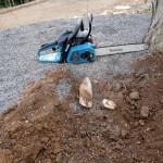 木の根の処理