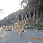 般若寺の植栽