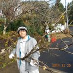 桜の木の撤去