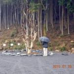 境内の様子(ヤマモモの木)