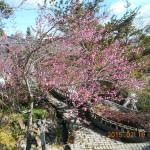 梅の木の様子