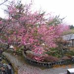 植栽の様子(梅の木)