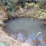ホタル池の様子