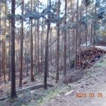 間伐作業中の様子