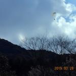 パラグライダーが飛んでいました