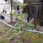 植栽の様子
