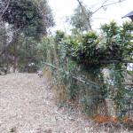 竹柵の補修