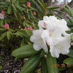 境内の植栽(花々)