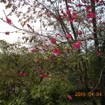 境内の花々