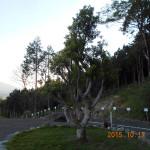ヤマモモの木の様子(午後)