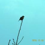鳥がいました