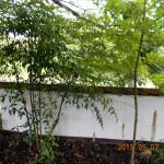 植栽の様子(ナンテン)