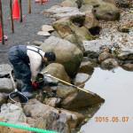 大池の清掃の様子