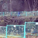 ホタル池周辺の柵の補修