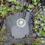 涅槃池の様子(排水口)