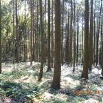 林道般若寺線の様子