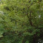 境内の植栽の様子