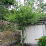 境内の植栽の様子(梅の木)
