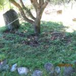 ヤマモモの木周辺の草取りを行っています