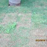 サークル内の芝