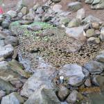 大池の様子(清掃前)