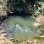 ほたる池の様子