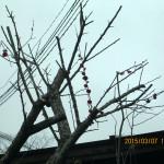 梅の花の様子(午前10時半頃)