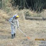 清掃の様子(草刈り)