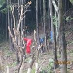 森林組合の方々(作業の様子)