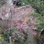 梅の花の様子