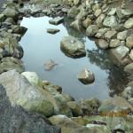 大池の様子(清掃後)
