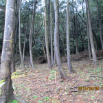 森林組合(間伐の様子)