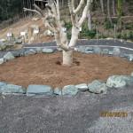 ヤマモモの木周辺の整備