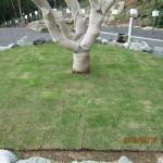 ヤマモモの木の様子