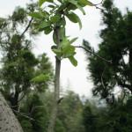 植栽の様子(グミの木)