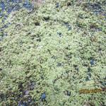 境内の植栽(苔)
