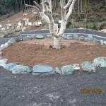 ヤマモモの木へ土の搬入作業