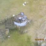 大池の様子(カエル)