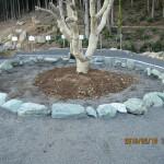 ヤマモモの木の周辺整備