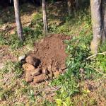 掘り起こした土