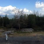 桜の木の移植