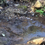 貯水タンク横の小池