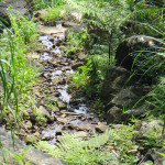 上流からの水量の確認