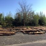 木材の様子