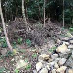 台風通過後の境内の様子
